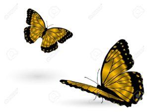 11556936-magnifiques-papillons-d-or-sur-fond-blanc