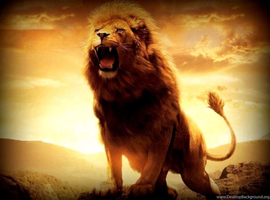 L'attribut alt de cette image est vide, son nom de fichier est 820231_angry-lion-wallpapers-hd-1080p_942x698_h.jpg.
