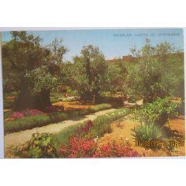 L'attribut alt de cette image est vide, son nom de fichier est carte-postale-israel-jerusalem-le-jardin-de-gethsemane-1081100219_ML.jpg.